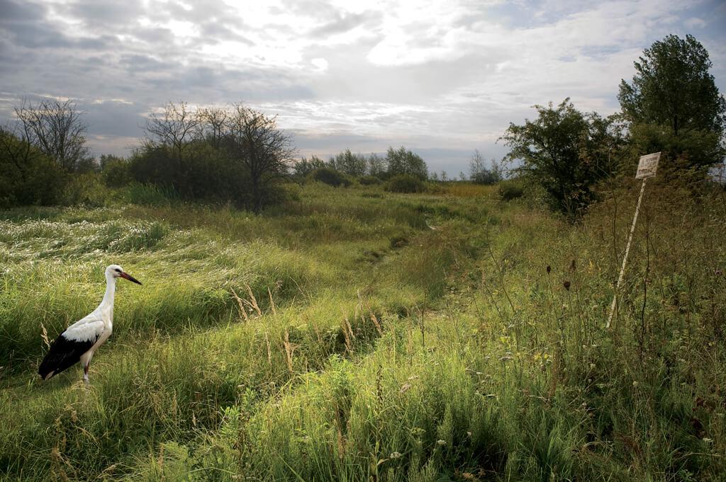 Bocian i łąka