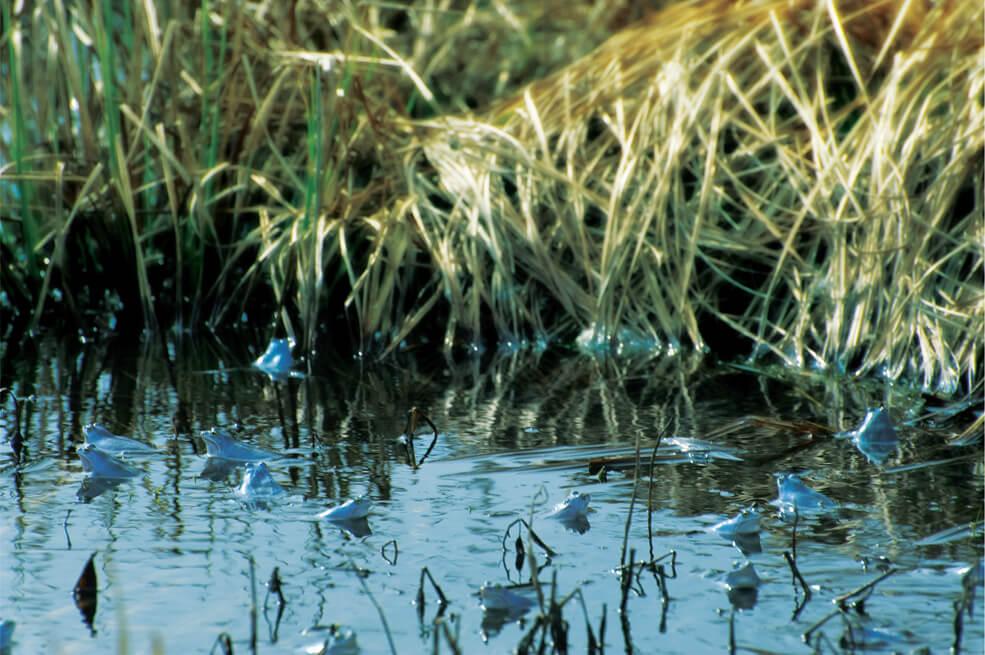 Woda rzeki w przybliżeniu